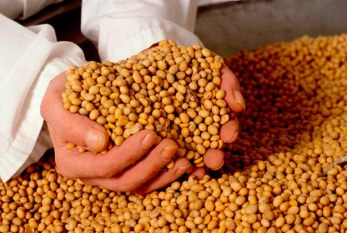 Venezuela: Monsanto sale con las tablas en la cabeza,campesinos redactan nueva ley de semillas