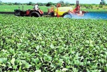 Informe sobre las actividades de Monsanto