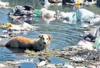 La mitad de los ríos de Latinoamérica, altamente impactados por la contaminación