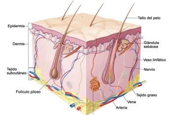 España: Los casos de cancer de piel aumentan un 38 % en los últimos años