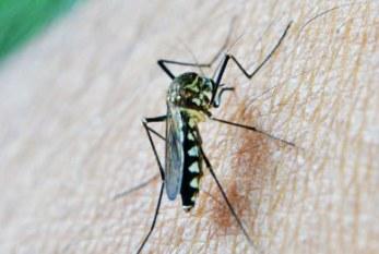 La OMS considera el virus del Zika una amenaza de proporciones alarmantes