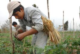 OIT destaca déficit masivo de trabajo decente para jóvenes