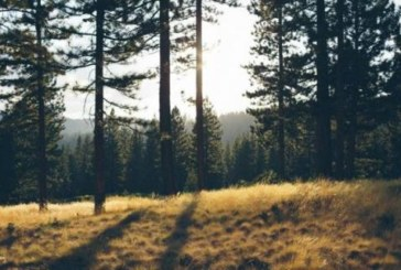 Día Forestal Mundial: Las protecciones de los guardianes de la naturaleza