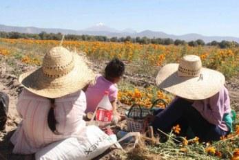 México: Niegan autoridades reportes de trata en campos agrícolas