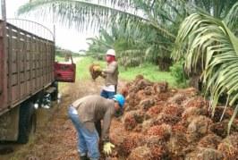 Colombia: Salud laboral en la industria de aceite