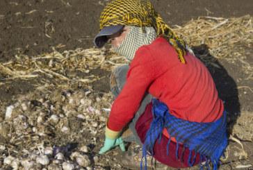 OIT: El conflicto y el desplazamiento masivo aumentan el trabajo infantil.