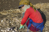 OIT: El conflicto y el desplazamiento masivo aumentan el trabajo infantil