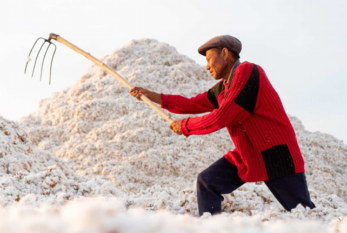 OIT: Los activistas celebran el progreso hacia la erradicación del trabajo forzoso